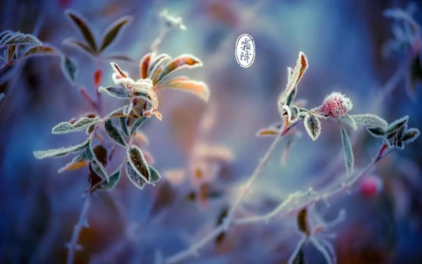 【霜降】秋将逝、冬将至 白癜风深秋养生秘籍请查收